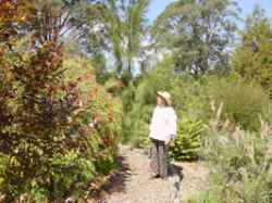 Take a tour of our Australian Natives Garden.